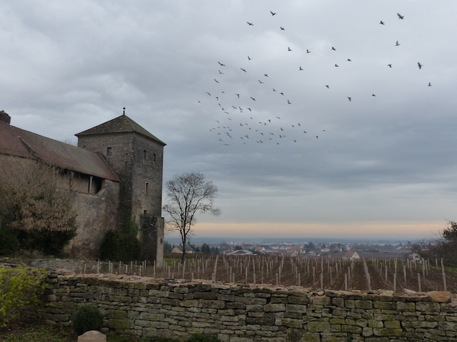 Winds of change in burgundy how will this impact wine lovers cn co - The splendid transformation of a vineyard in burgundy ...